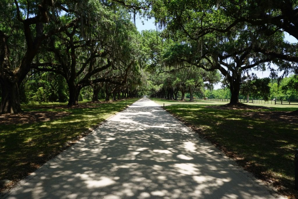 The Avenue of Oaks